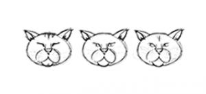 the-cat-pac.de